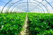 Blossman Gas Agricultural Services