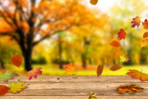 wooden table in front of colorful fall leaves