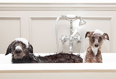 Two Dogs in Bath Tub Covered In Bubbles Promoting Current Water Heater Promotion