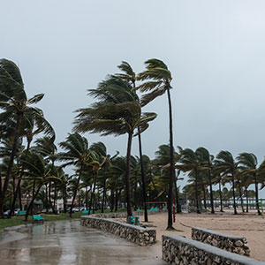 Palm Trees on Beach and Boardwalk Blowing in a Storm