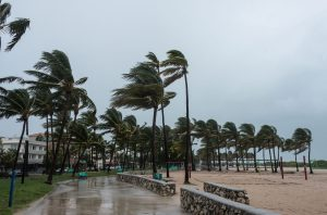 Palm Trees On Beach In Heavy Wind