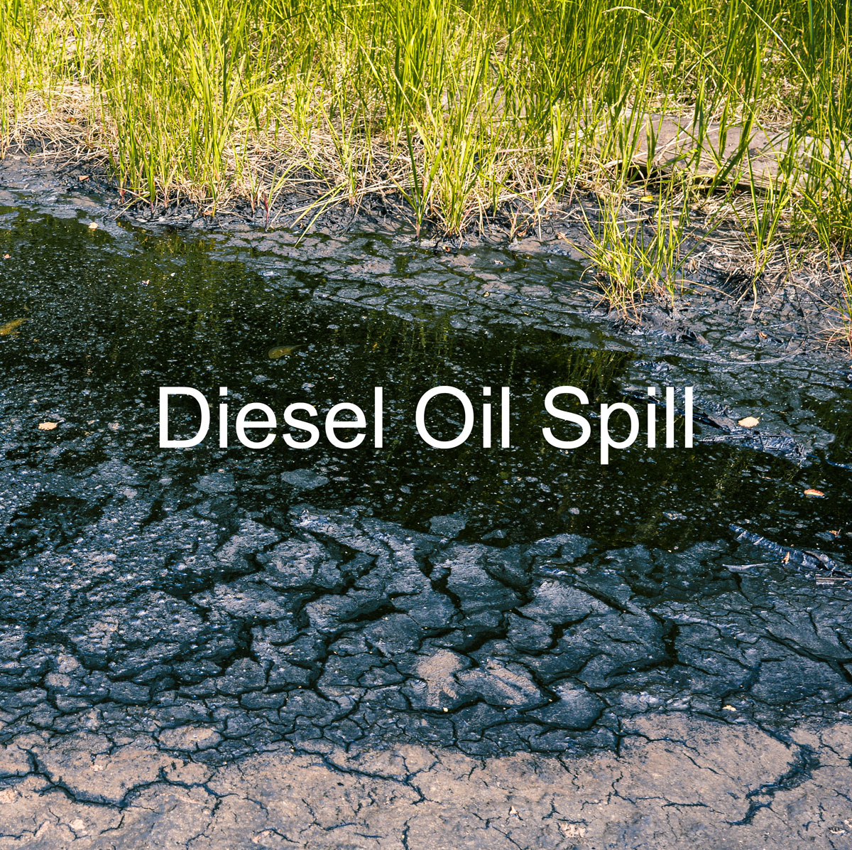Diesel Oil Spill - Green Grass Surrounding the Dead area from the oil